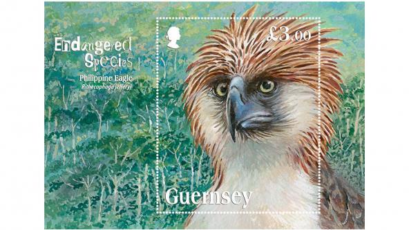 Philipppine Eagle